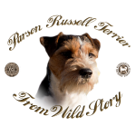 Hodowla Parson Russell Terrier FCI From Wild Story