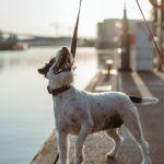 hejger_wizerunkowa_from_wild_story_10